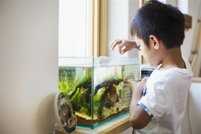 A quelle fréquence nourrir les poissons?